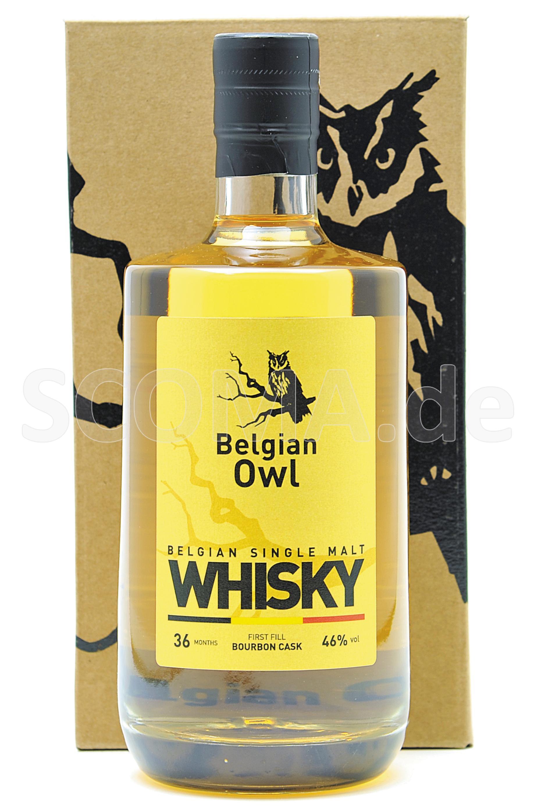Belgian Owl 3 years